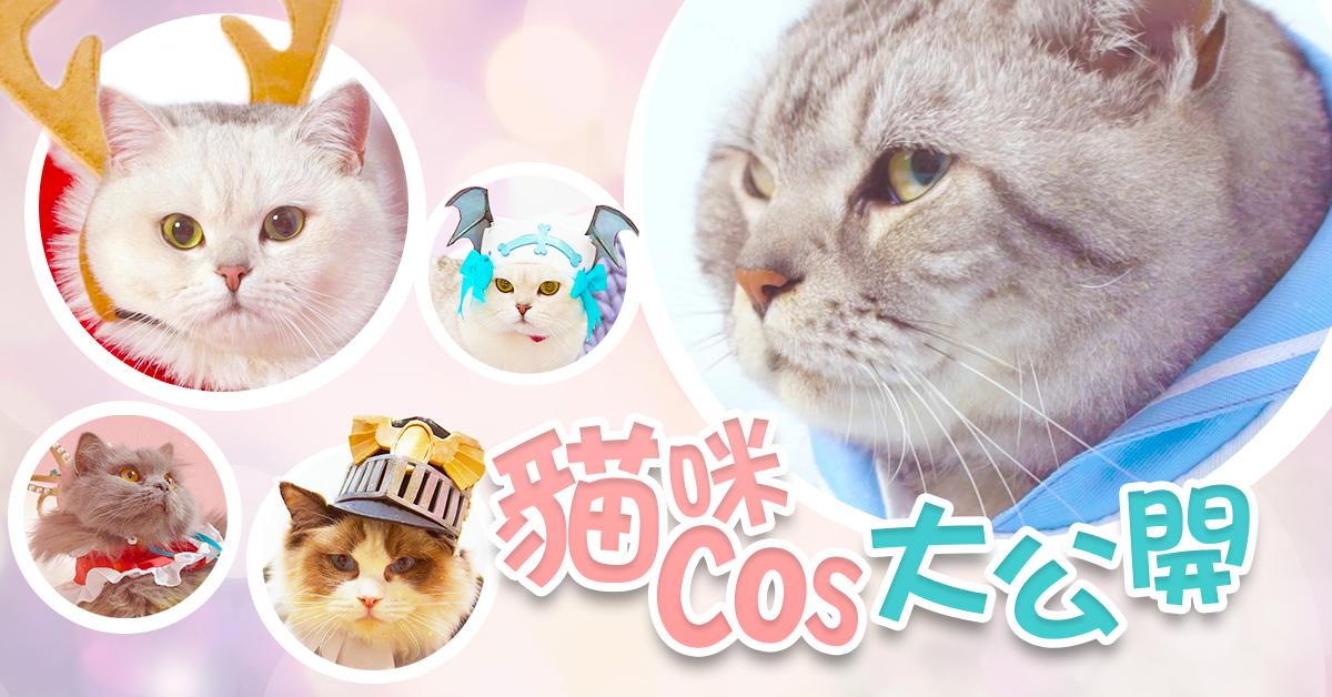 喵星人參上 《幻想計劃》貓咪cos大公開